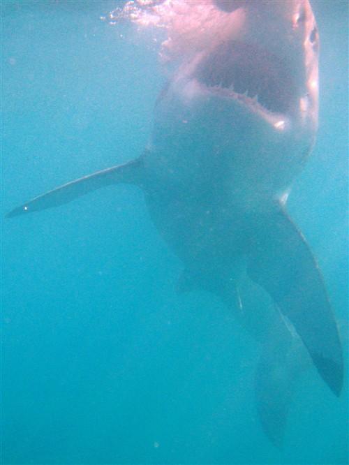 040 Jaws.jpg