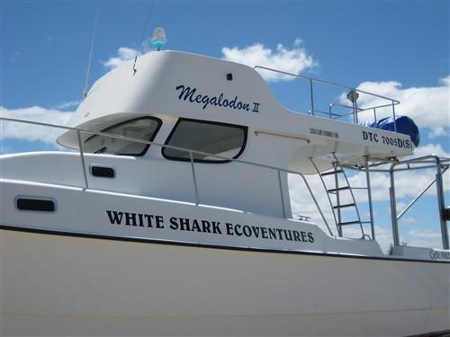 066 Megalodon II - Our tour catamaran.jpg