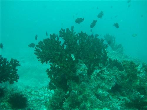 12 Diving Sherwood Forest.jpg