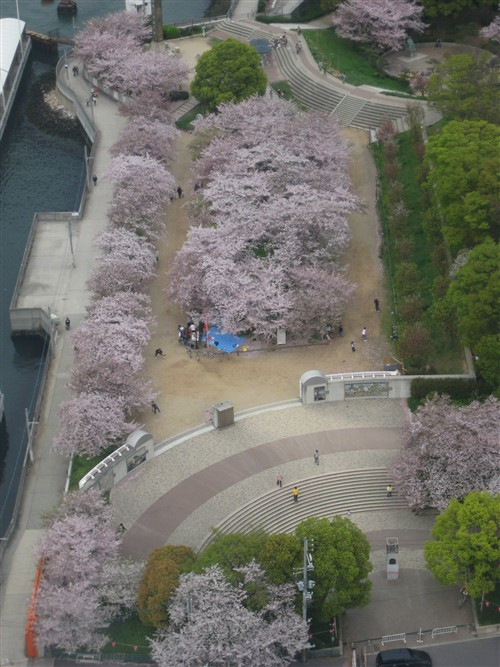 010 Park with Cherry Blossoms in full bloom seen from above.jpg