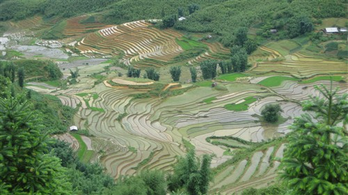 186 Sapa rice terraces.jpg