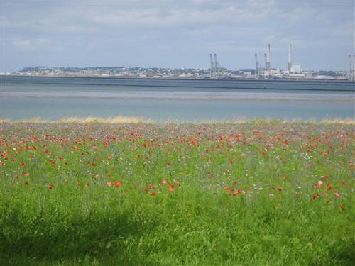 099 Wildflowers in Normandy.jpg