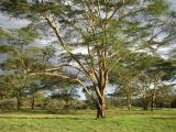 View The Kenya Album
